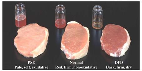 Hewan Kurban Jangan Sampai Stres, Daging Jadi Gak Enak dan Berbahaya