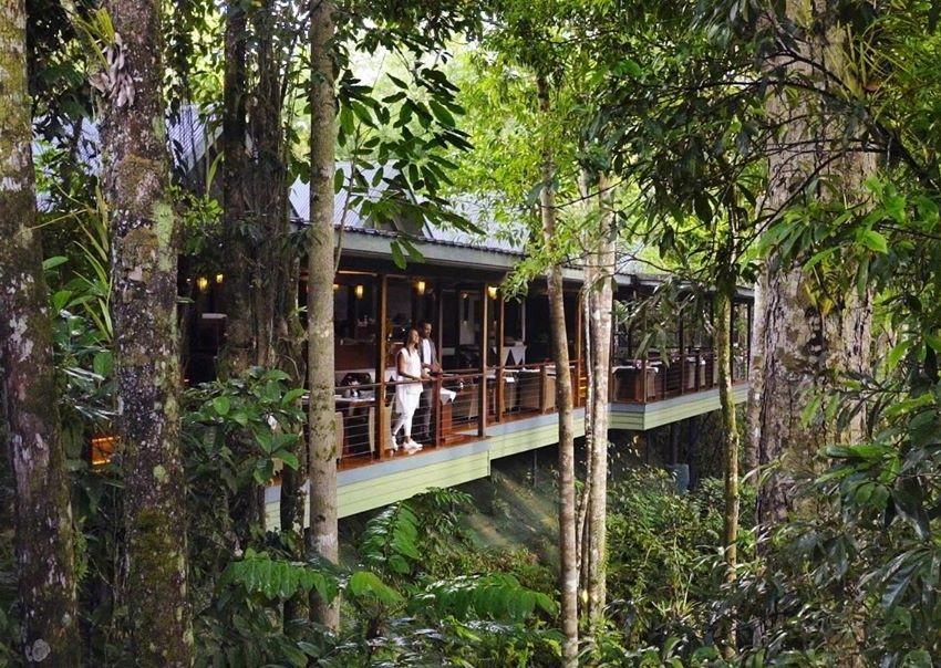 10 Hotel di Dunia yang Lokasinya di Tengah Hutan, Indonesia Juga Punya