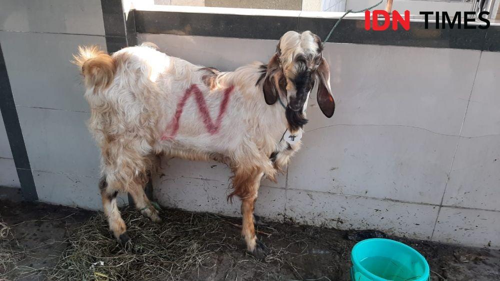 Idul Adha, Polda Metro Bantu Salurkan Bansos dan Daging Kurban