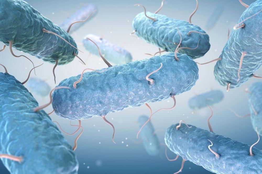 7 Penyakit Menular dari Sapi dan Kambing, Masaklah Daging dengan Benar