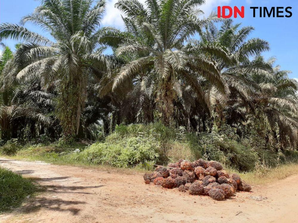 Praktik Kerja Paksa, AS Larang Produk Sawit Malaysia