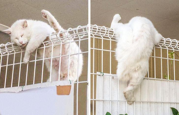 Kelewat Santuy, 13 Posisi Tidur Kucing ini Bikin Geleng-Geleng Kepala