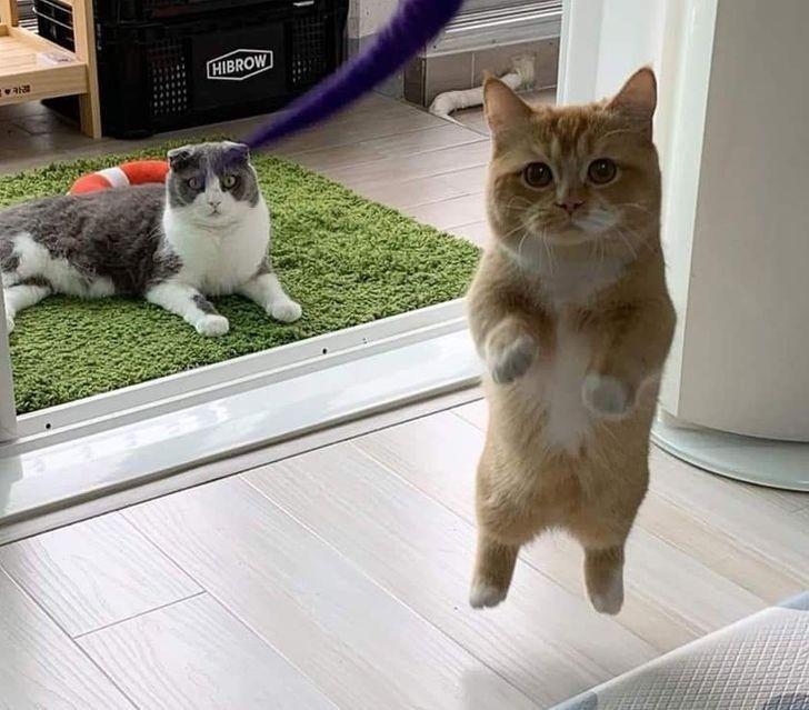 13 Pose Gemas tapi Kocak Kucing Melawan Gravitasi, Busyet Kayak Alien!