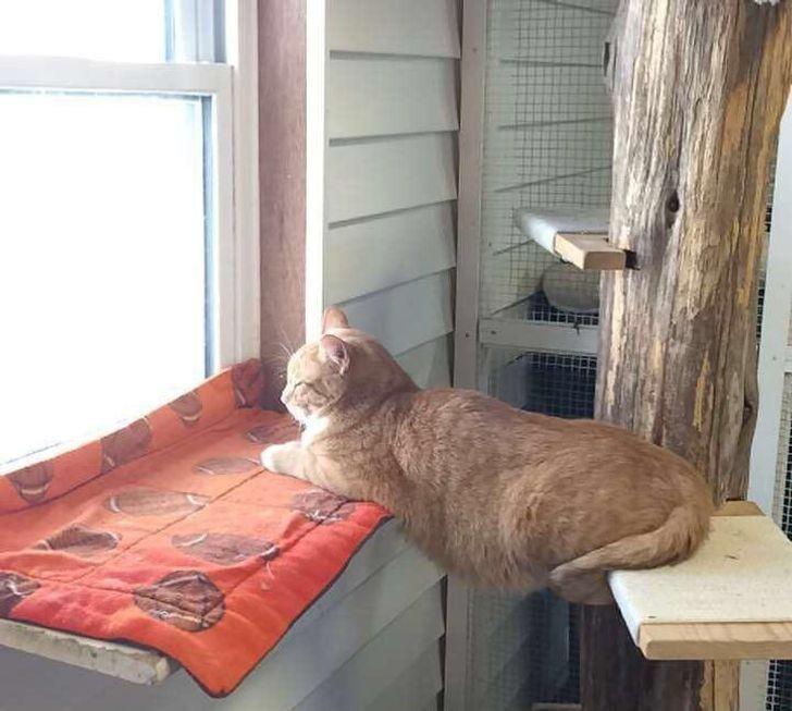 13 Kucing Gemas yang Melawan Gravitasi, Bisa 'Melayang' dan Kocak Abis