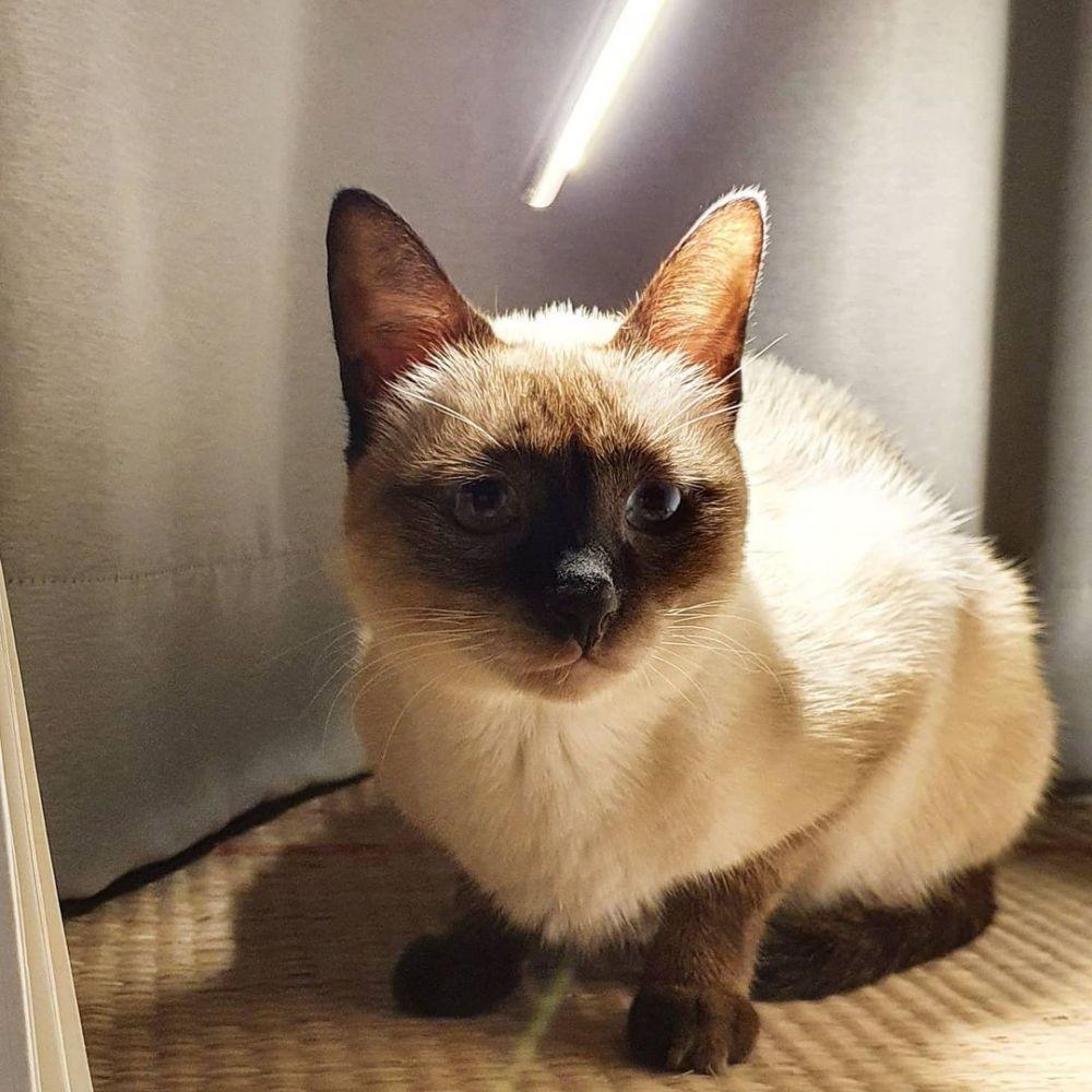 Punya Wajah Galau, 10 Kucing Jadi Tenar