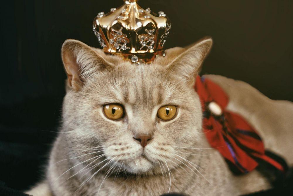 Agung, 7 Bukti Kucing Pernah Jadi Hewan Paling Berkuasa