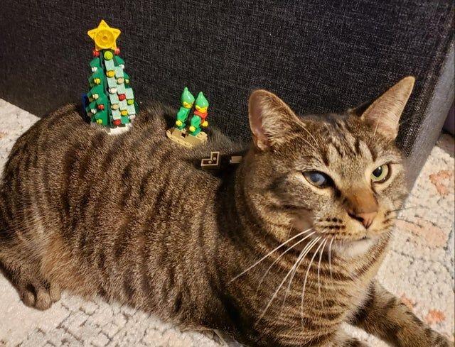 13 Kucing Kocak Ini Pasrah Walau Badan Ditumpuki Barang, Mager Pol!