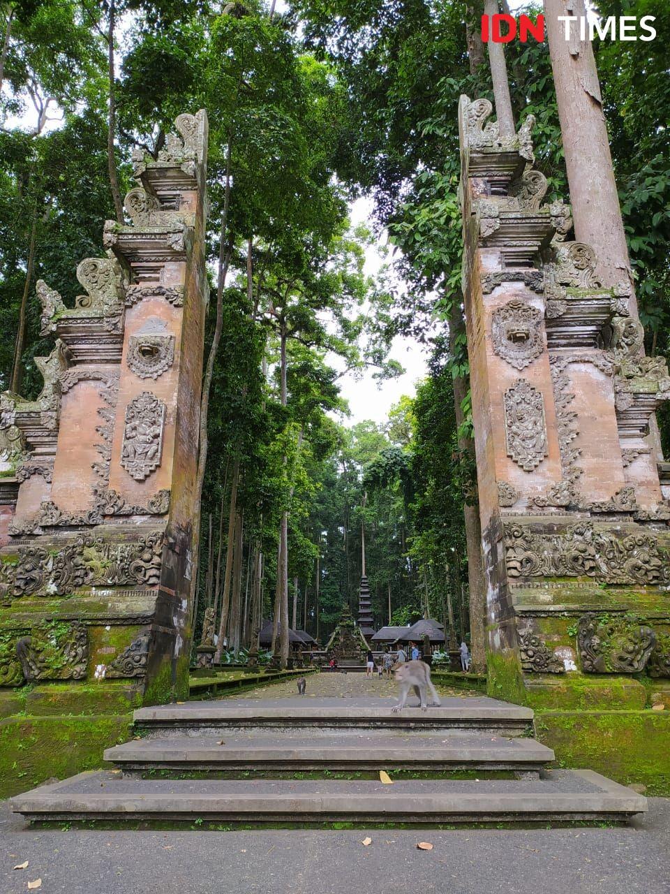 Cerita Pengelola Wisata Sangeh di Bali, Bertahan Rawat 600 Ekor Monyet