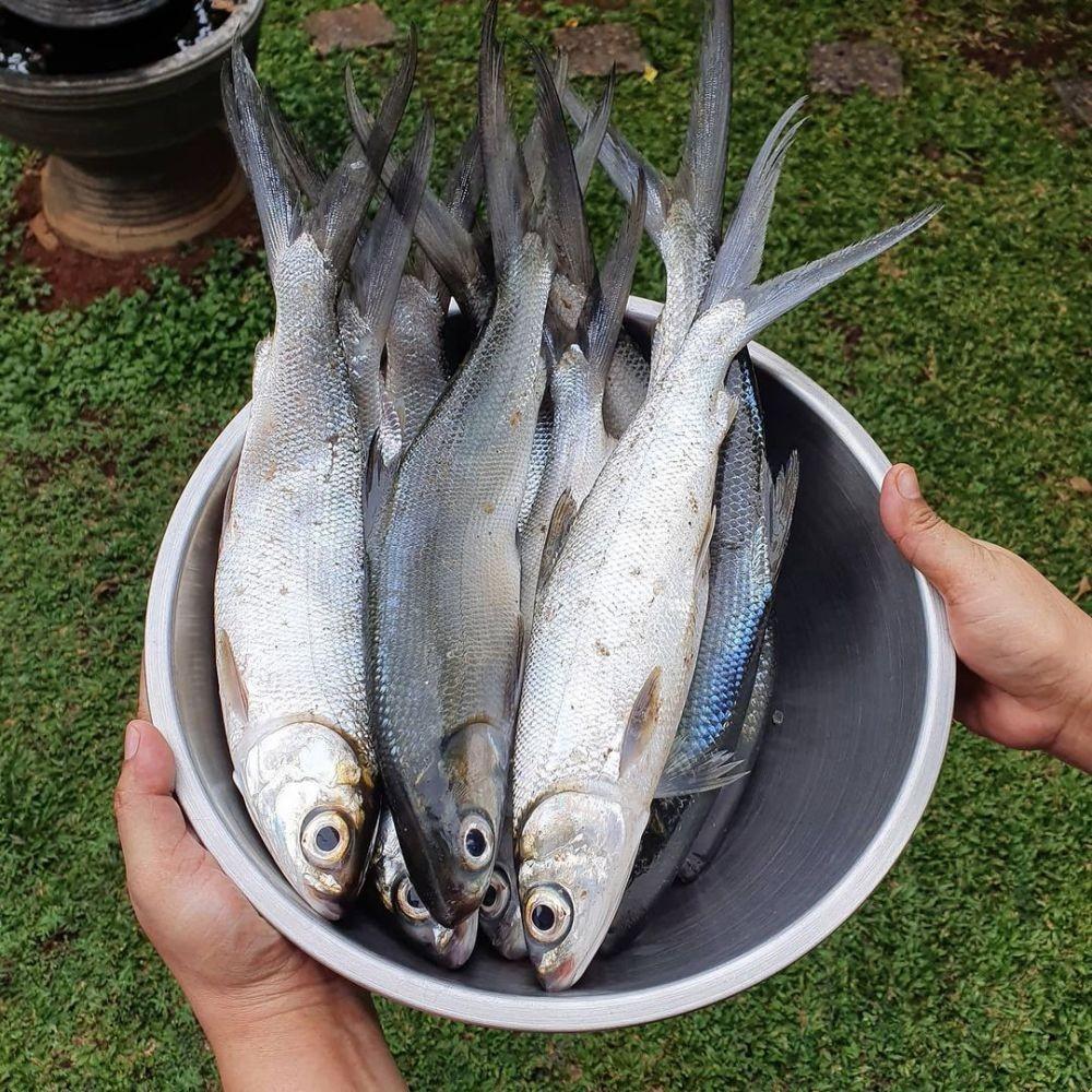 Resep Pecak Bandeng Khas Banten, Pedasnya Mantap