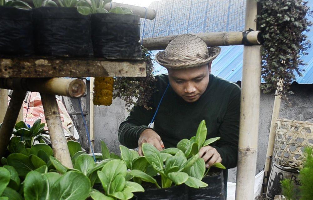 Anak Muda di Klungkung Kembangkan Sayuran Organik di Lahan 4x5 Meter