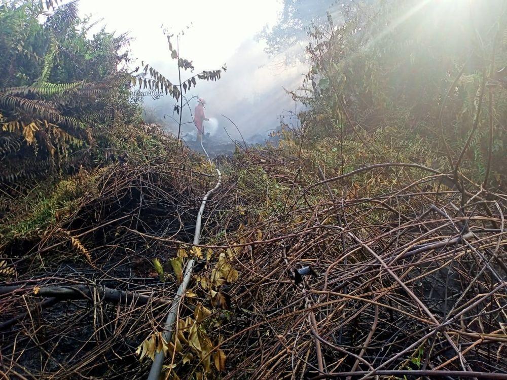 Kebakaran Hutan dan Lahan di Siak, Api Belum Bisa Dipadamkan