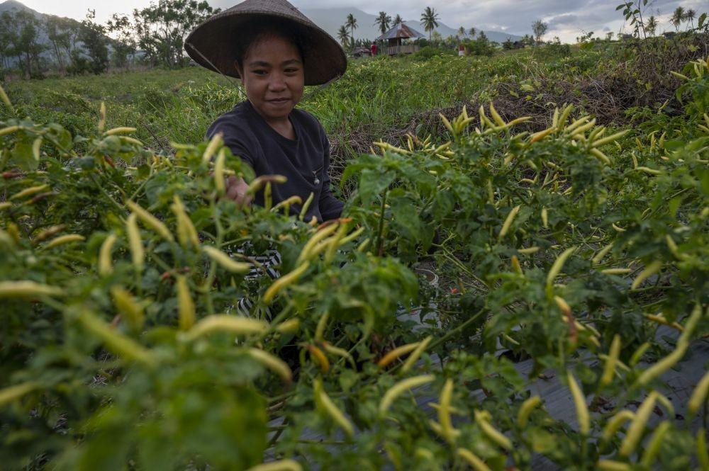 Bantu Petani, Realisasi KUR Pertanian Tembus Rp56,3 Triliun