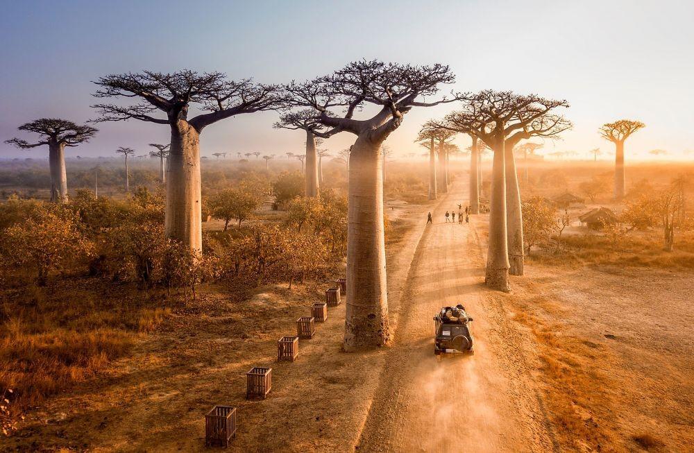 10 Hutan Paling Unik dan Menakjubkan di Dunia, Banyak Pohon Estetik