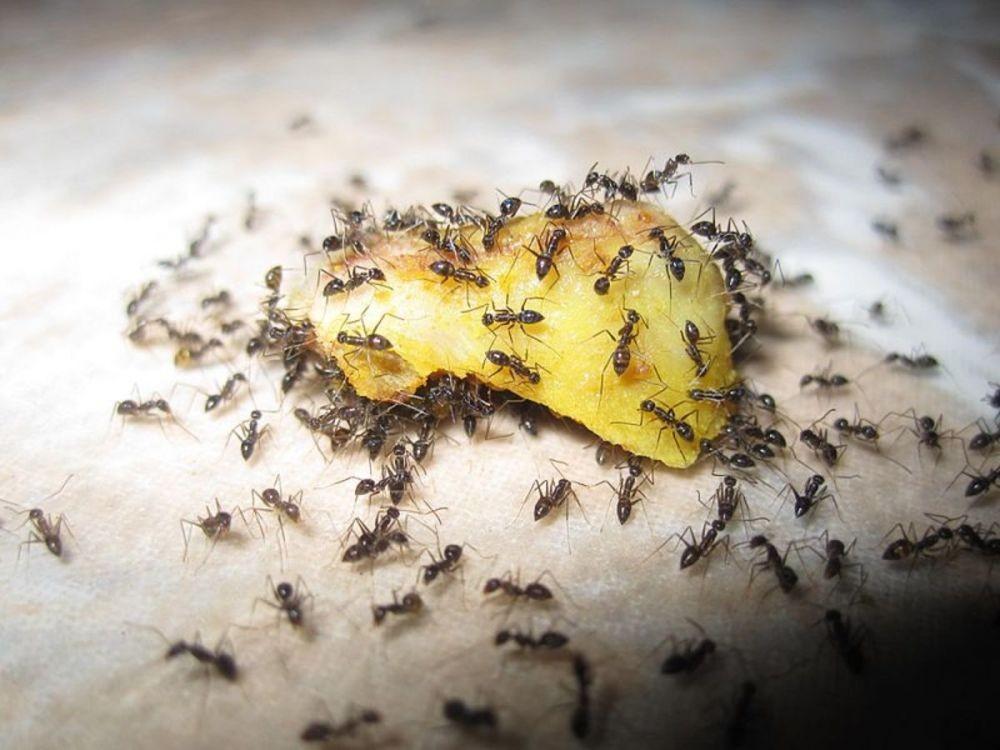 5 Fakta Lingkaran Kematian, Fenomena Unik oleh Semut Buta