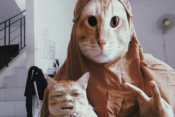 10 Potret Lucu Kucing Jadi Korban Filter Tukar Wajah, Pemiliknya Iseng